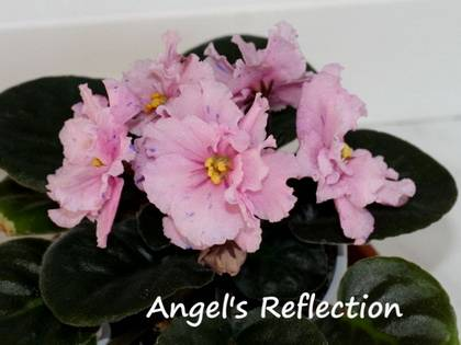 AngelsReflection7