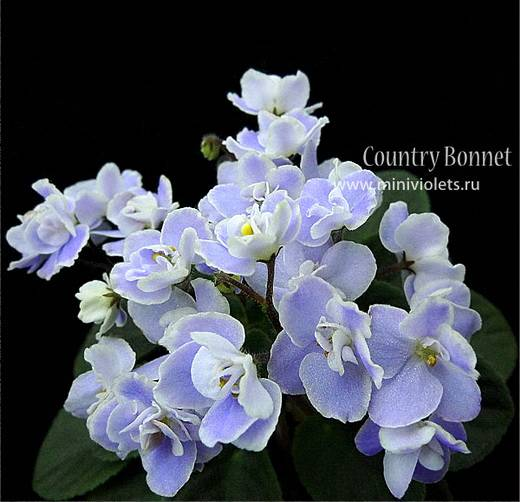 CountryBonnet6