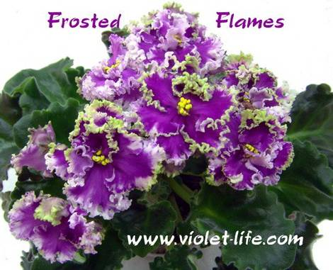 FrostedFlames1
