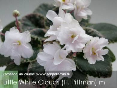 LittleWhiteClouds5