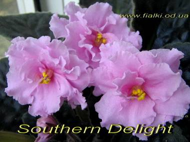SouthernDelight5