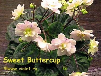 SweetButtercup2