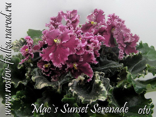 macs-sunset-serenade1