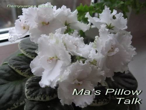 mas-pillow-talk1