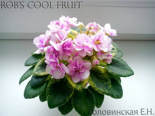 robs-cool-fruit1